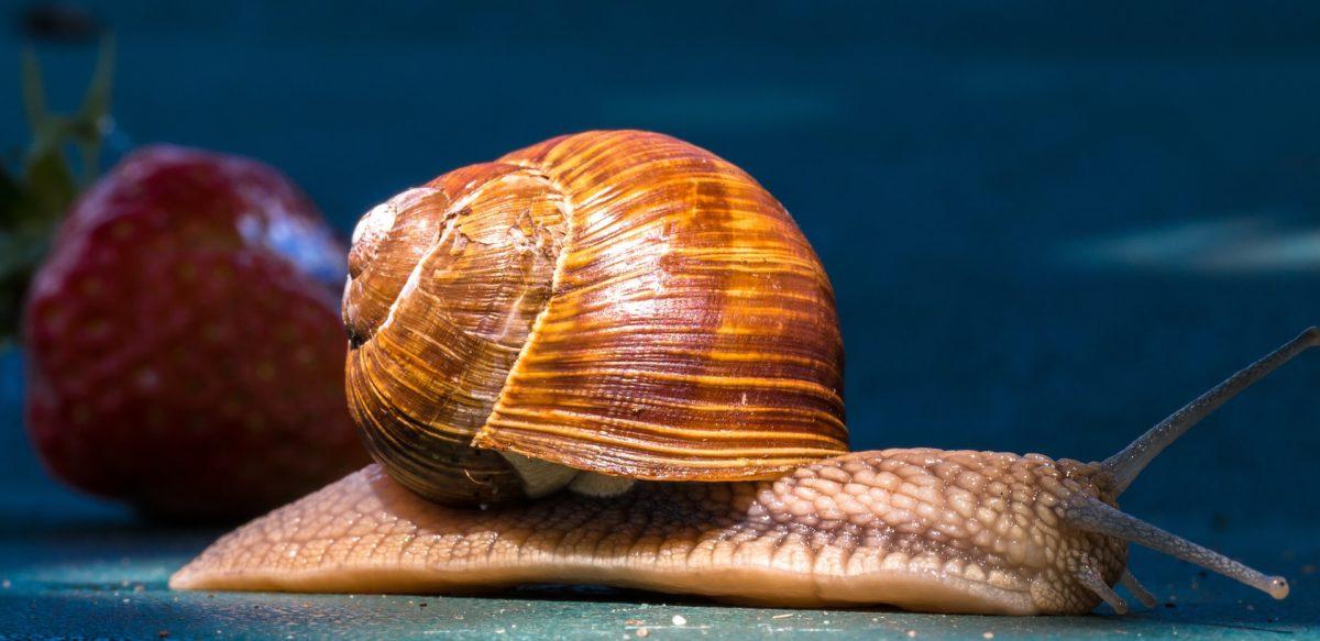 Cover Letter Snail
